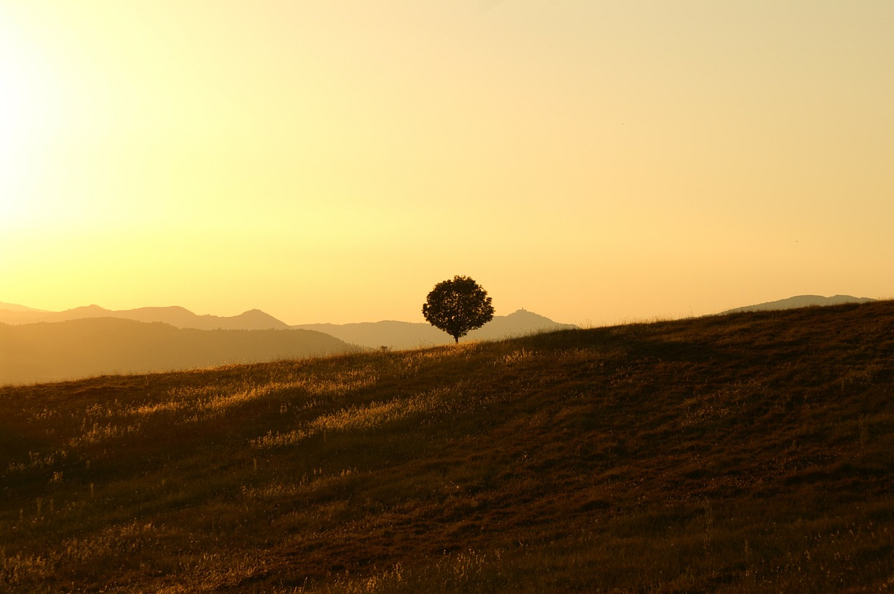 tree, solitary, landscape